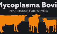 Mycoplasma Bovis for farmers